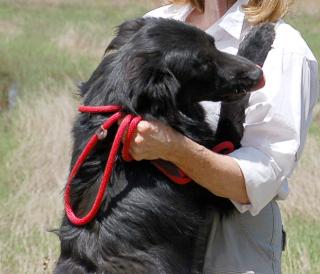 Dog Training Belchertown Ma